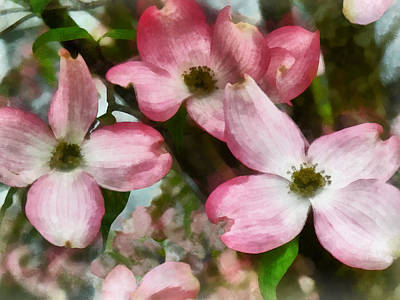 Photograph - Pink Dogwood Closeup by Susan Savad