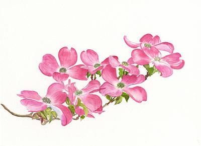 Pink Blossoms Painting - Pink Dogwood by Sharon Freeman