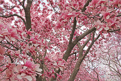 Pink Everywhere Print by Becky Lodes