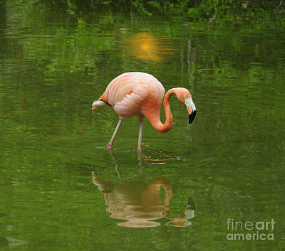 Photograph - Pink Flamingo With Evening Lights by Cindy Lee Longhini