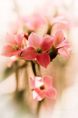 Photograph - Pink Floral 1 by Jill Smith