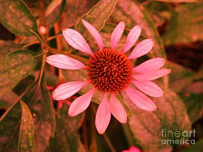 Breast Cancer Awareness Month Photograph - Pink Flower For Breast Cancer Awareness Month 2 by Artie Wallace