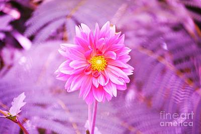 Breast Cancer Awareness Month Photograph - Pink Flower For Breast Cancer Awareness Month by Artie Wallace