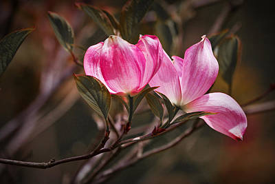 Photograph - Pink Flower Tree Blossoms No. 247 by Randall Nyhof