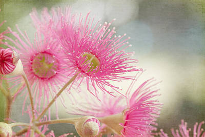 Pink Flowering Art Print