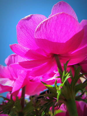 Photograph - Pink Flowers In The Sky by Eva Kondzialkiewicz