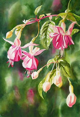 Fuchsia Pink Painting - Pink Fuchsias by Sharon Freeman