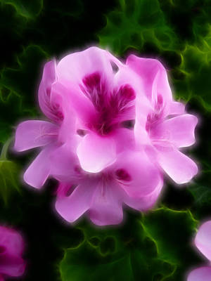 Photograph - Pink Geranium Flowers Abstract by Cindy Wright