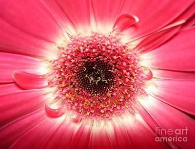 Art Print featuring the photograph Pink Gerbera Daisy Close-up by Kerri Mortenson
