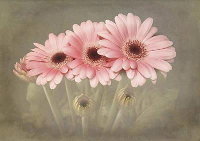 Pink Gerbera Daisys Art Print by Fiona Messenger