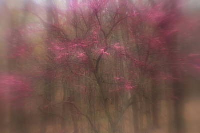 Photograph - Pink Haze by Coby Cooper