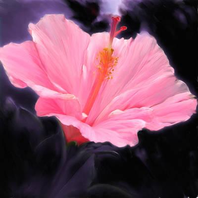 Pink Hibiscus Art Print by Marcos Porcayo