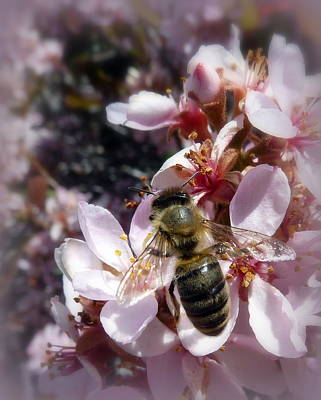 Photograph - Pink Honey by Cindy Wright