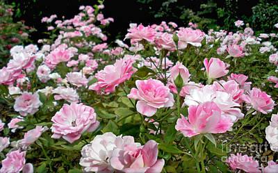 Floribunda Photograph - Pink Iceberg Roses by Kaye Menner