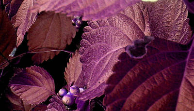 Photograph - Pink Leaves by Juliana  Blessington