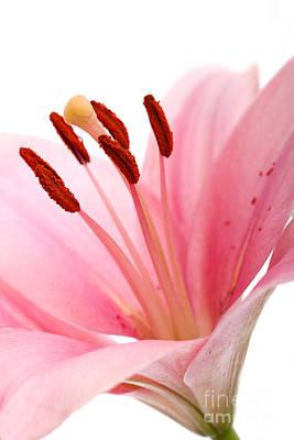 Pink Lilies 02 Print by Nailia Schwarz