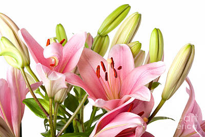 Red Lily Wall Art - Photograph - Pink Lilies 04 by Nailia Schwarz