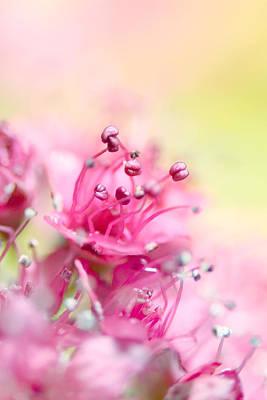 Pink Magic Art Print by Sharon Johnstone