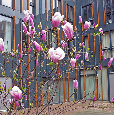 Photograph - Pink Magnolia. Square Format by Ausra Huntington nee Paulauskaite