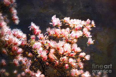 Pink Magnolias Art Print by Elaine Manley