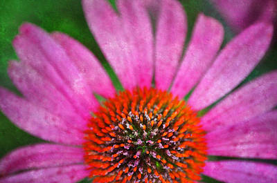 Flower Photograph - Pink N Orange by Emily Stauring