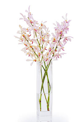 Pink Orchid In Vase Original