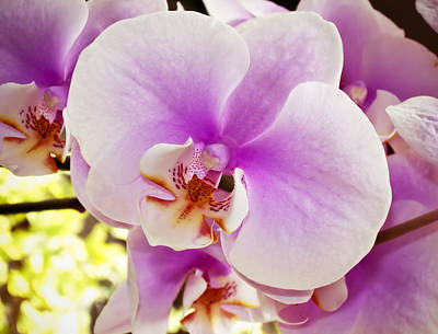 Epiphyte Photograph - Pink Orchid by Joe Carini - Printscapes