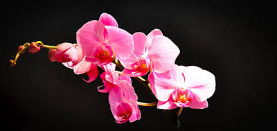 Art Print featuring the photograph Pink Orchids At A Party by Ronda Broatch
