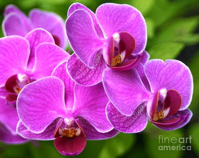 Photograph - Pink Orchids B by Cindy Lee Longhini