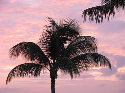 Photograph - Pink Palm by Fred  Sheridan