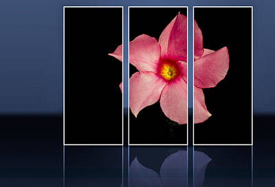 Photograph - Pink Panel by Jean Noren
