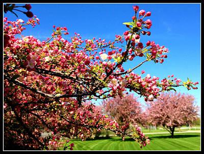 Photograph - Pink Peach Tree by Lora Mercado