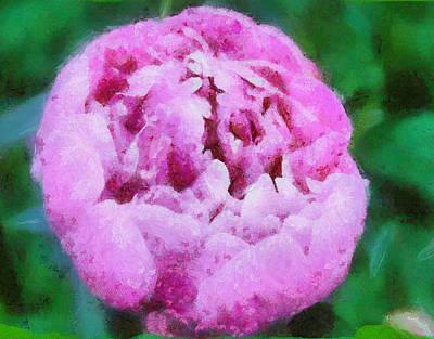 Pink Peony Art Print by Elizabeth Coats