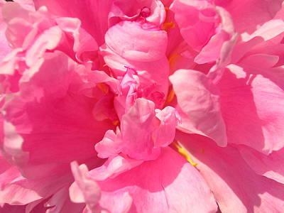 Pink Peony Art Print by Tina Ann Byers