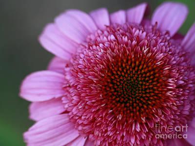 Pink Perfection Art Print