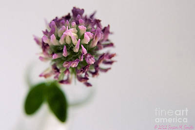 Susan Smith Photograph - Pink Perspective by Susan Smith