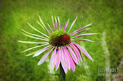 Photograph - Pink Petals by Andee Design