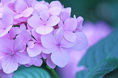 Becky Photograph - Pink Petals by Becky Lodes