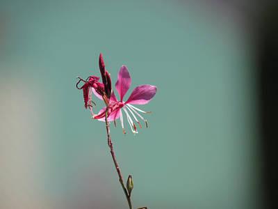 Photograph - Pink Petals by Bonnie Muir