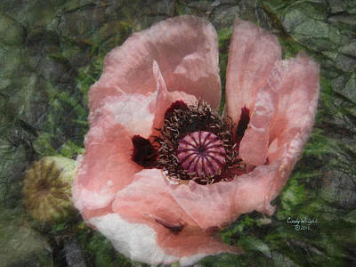 Photograph - Pink Petals Poppy by Cindy Wright