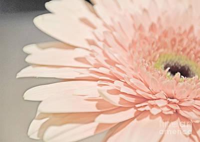 Photograph - Pink Petals by Traci Cottingham