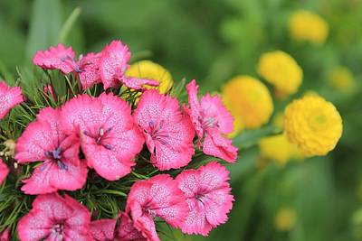 Pink Phlox And Yellow Buttons Art Print