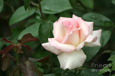 Art Print featuring the photograph Pink Promise by Living Color Photography Lorraine Lynch