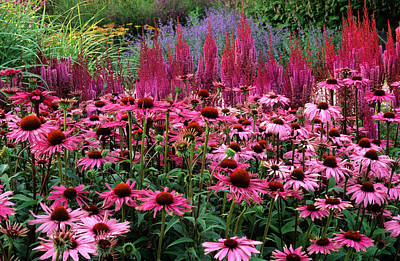 Designs In Nature Photograph - Pink, Purple, Blue, Red Border, Plant Combination by Neil Holmes