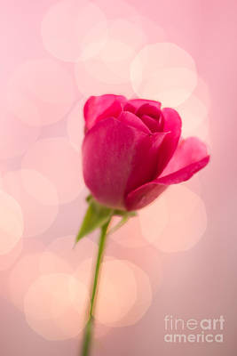 Photograph - Pink Rose Bud Bokeh by Ethiriel  Photography