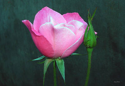 Art Print featuring the photograph Pink Rose by George Bostian