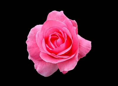 Photograph - Pink Rose by Scott Brown