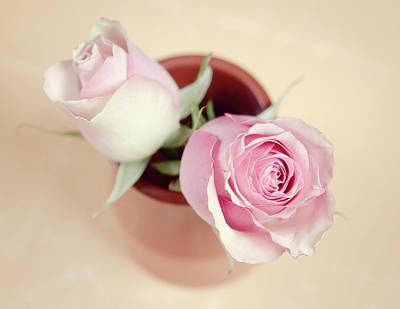 Colored Background Photograph - Pink Roses In Vase by Elke Vogelsang
