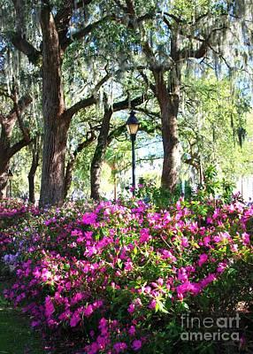Photograph - Pink Savannah Azaleas by Carol Groenen