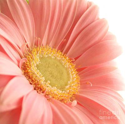 Pink Sherbert Blossom Art Print